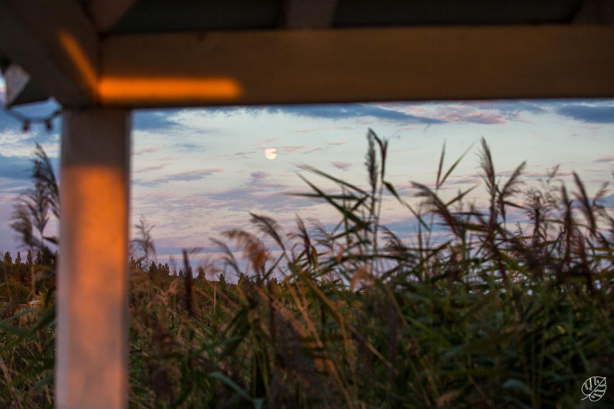 strandhochzeit hochzeitsfotograf bitterfeld